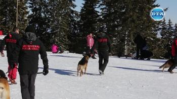 Планински спасителни кучета участваха в демонстрация на Витоша
