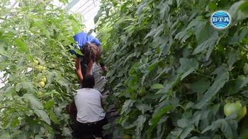 """Младежи с интелектуални затруднения отглеждат цветя и зеленчуци в """"Чудната градина"""""""