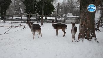 В студеното време се полагат допълнителни грижи за животните от Варненския зоопарк