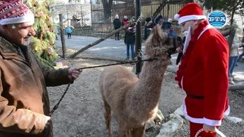 Дядо Коледа зарадва с лакомства животните във варненския зоопарк