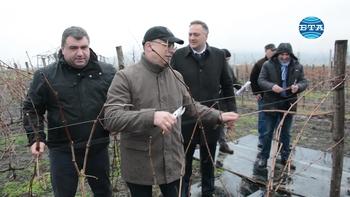 Министър Порожанов участва в ритуала по зарязване на лозята край село Белоградец