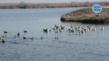 Птици, пострадали от бракониерство, бяха пуснати на свобода край Бургас