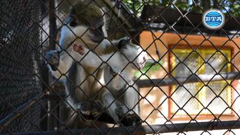 Нови малки обитатели във втория по големина зоопарк в страната