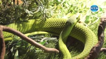 Изложба в Природонаучния музей в Пловдив показва някои от най-опасните влечуги