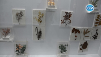 Странджа планина пази уникален и разнообразен растителен свят