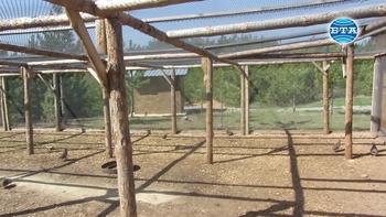Около 400 яребици пускат ежегодно в природата радомирските ловци