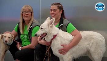 Кучета вместо PCR тестове