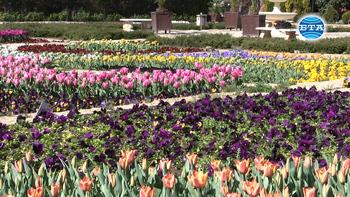 Интерактивно видео и виртуална разходка ще показват красотата на ботаническата градина в Балчик