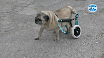 Русенец изработва безвъзмездно инвалидни колички за кучета и котки