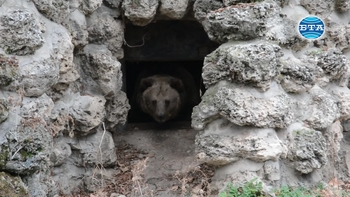 Топлото за сезона време събуди мечката във варненския зоопарк