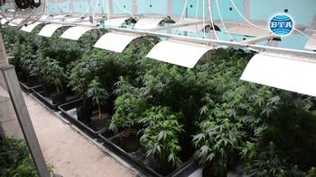 Разкрита е модерна лаборатория за марихуана в луковитското село Румянцево