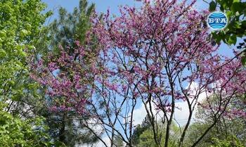 """Нова люлякова градина изграждат в парк """"Стратеш"""" в Ловеч, проблем обаче се оказва опазването на дръвчетата от недобросъвестни граждани"""