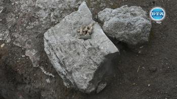 За поредна година археолозите проучват предполагаемия храм на Диана в антична Рациария